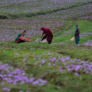 Instagram snapshots: Sajad Rafeeq in Kashmir